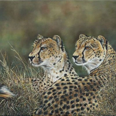 Cheetah Brothers by Robyn Ansell