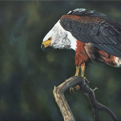 Eagle by Robyn Ansell