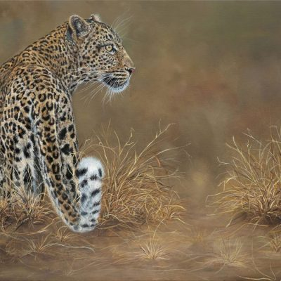 Leopard by Robyn Ansell