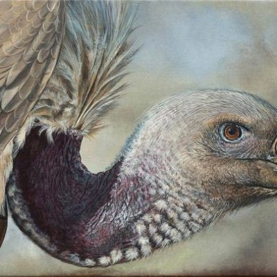 Cape Vulture by Robyn
