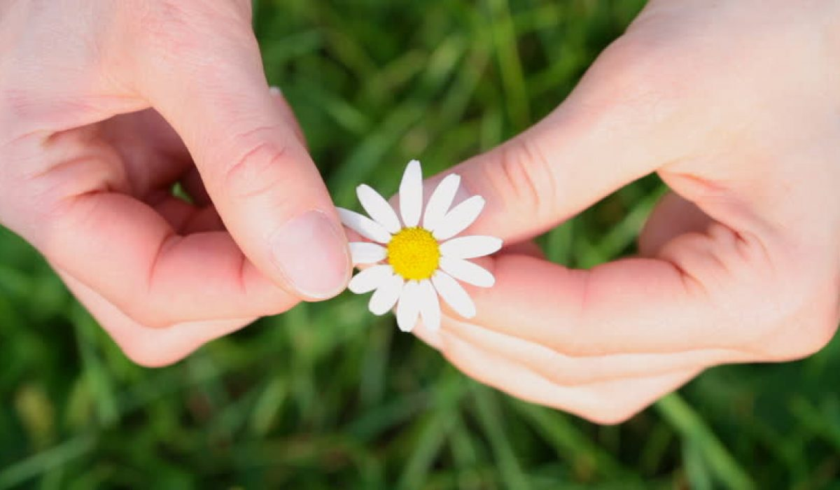 Hands holding a flower...