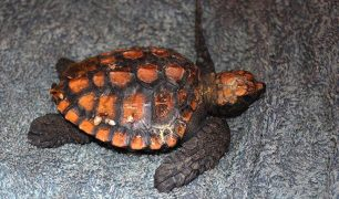 TurtleTime