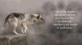 TryHarder-Wolf